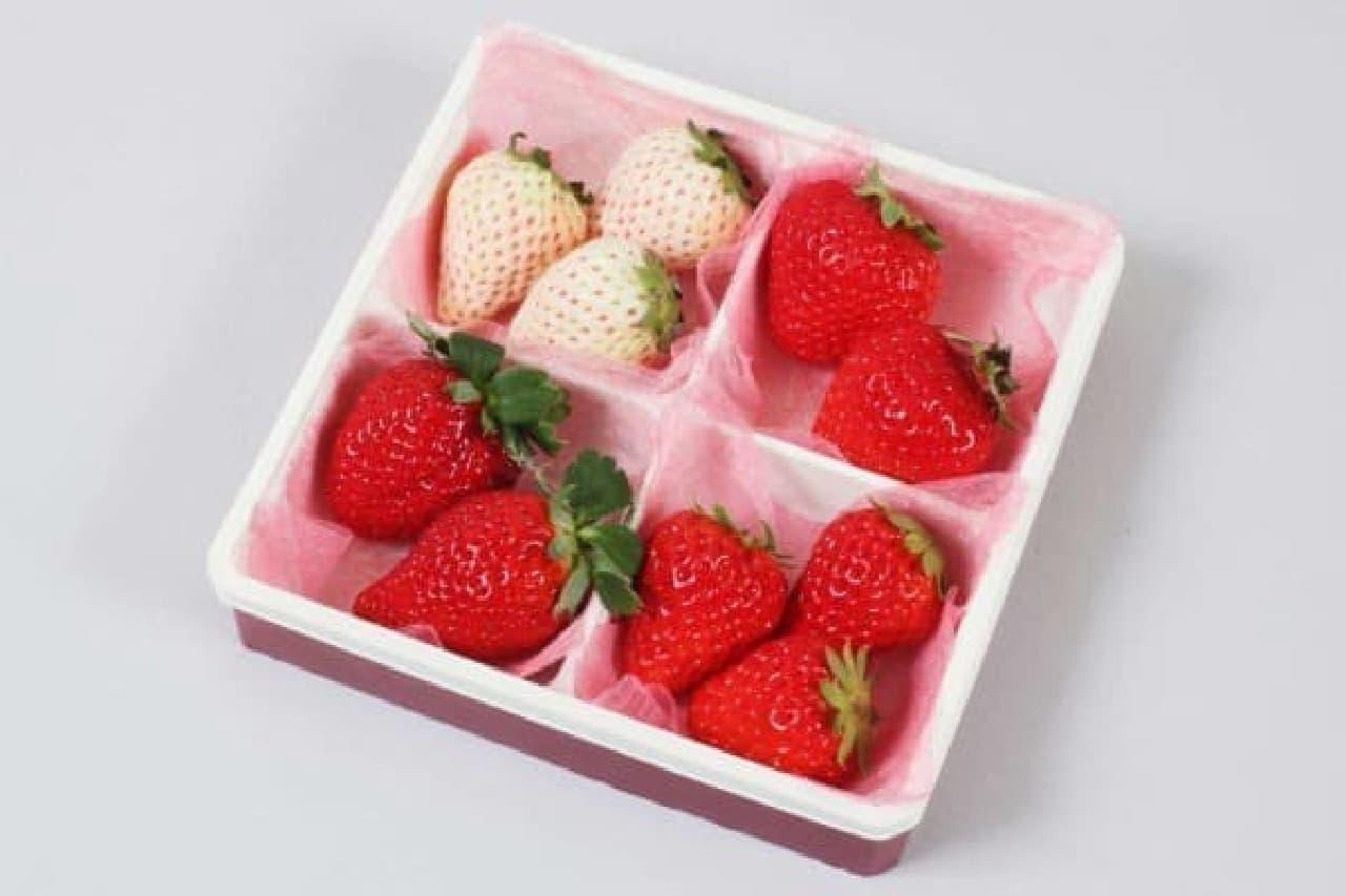 4種のイチゴを食べ比べ!