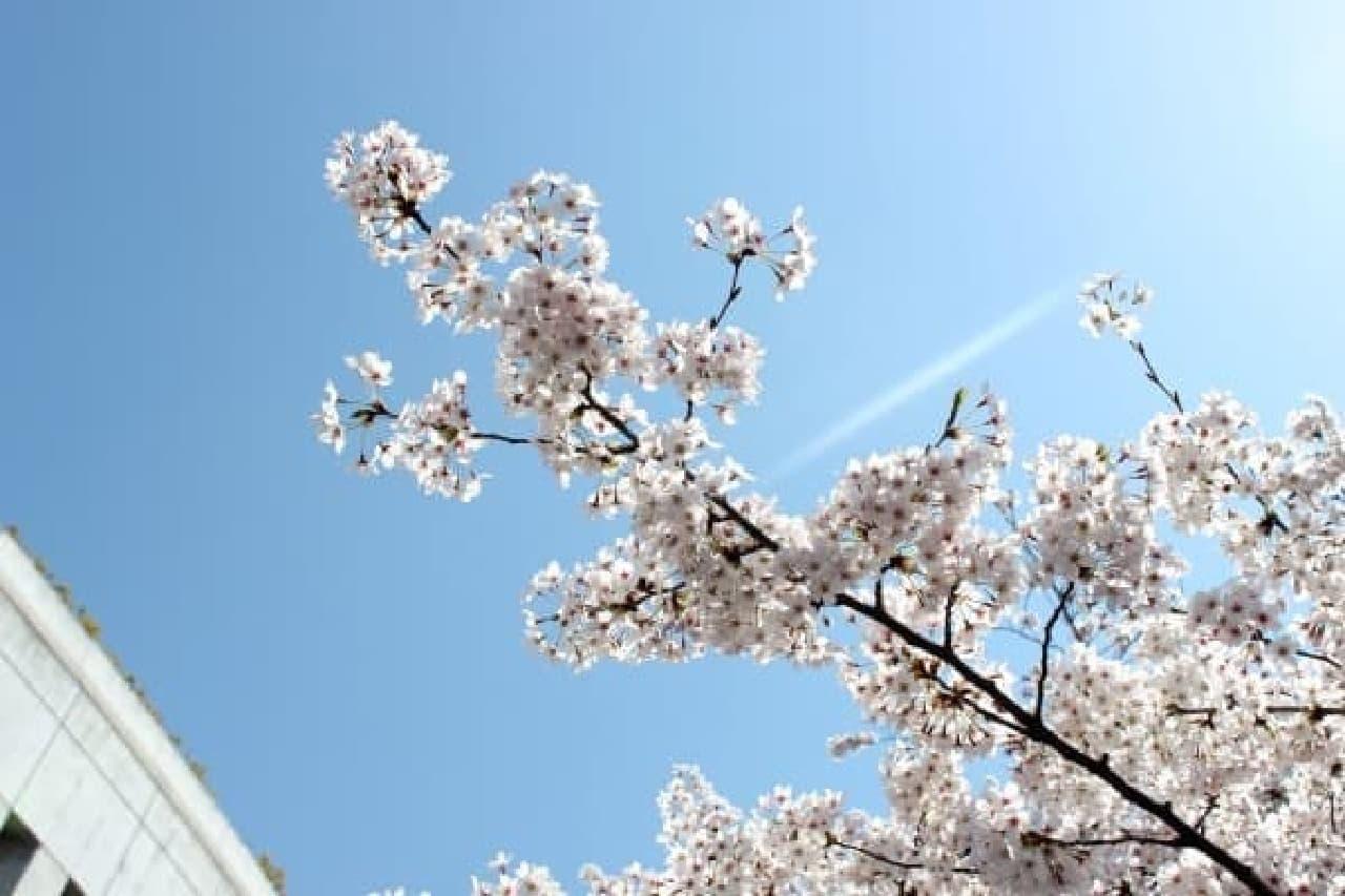 お口の中も春満開  (※写真はイメージです)