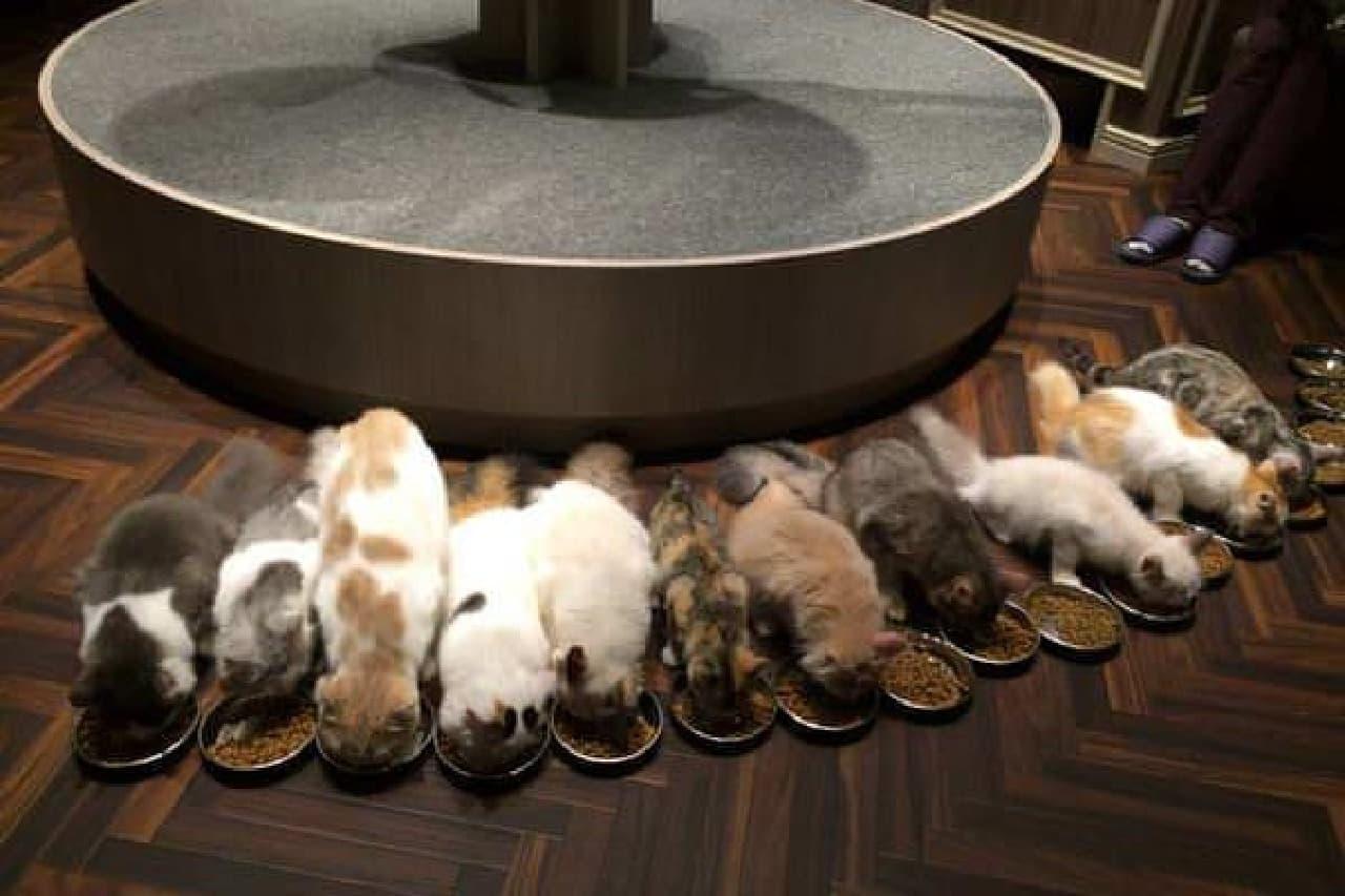子猫たちの食事風景