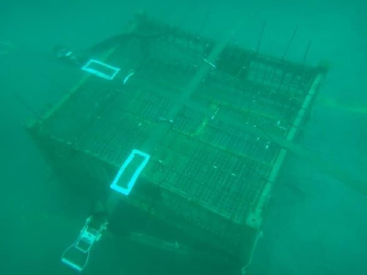 海底に沈めてあるようす