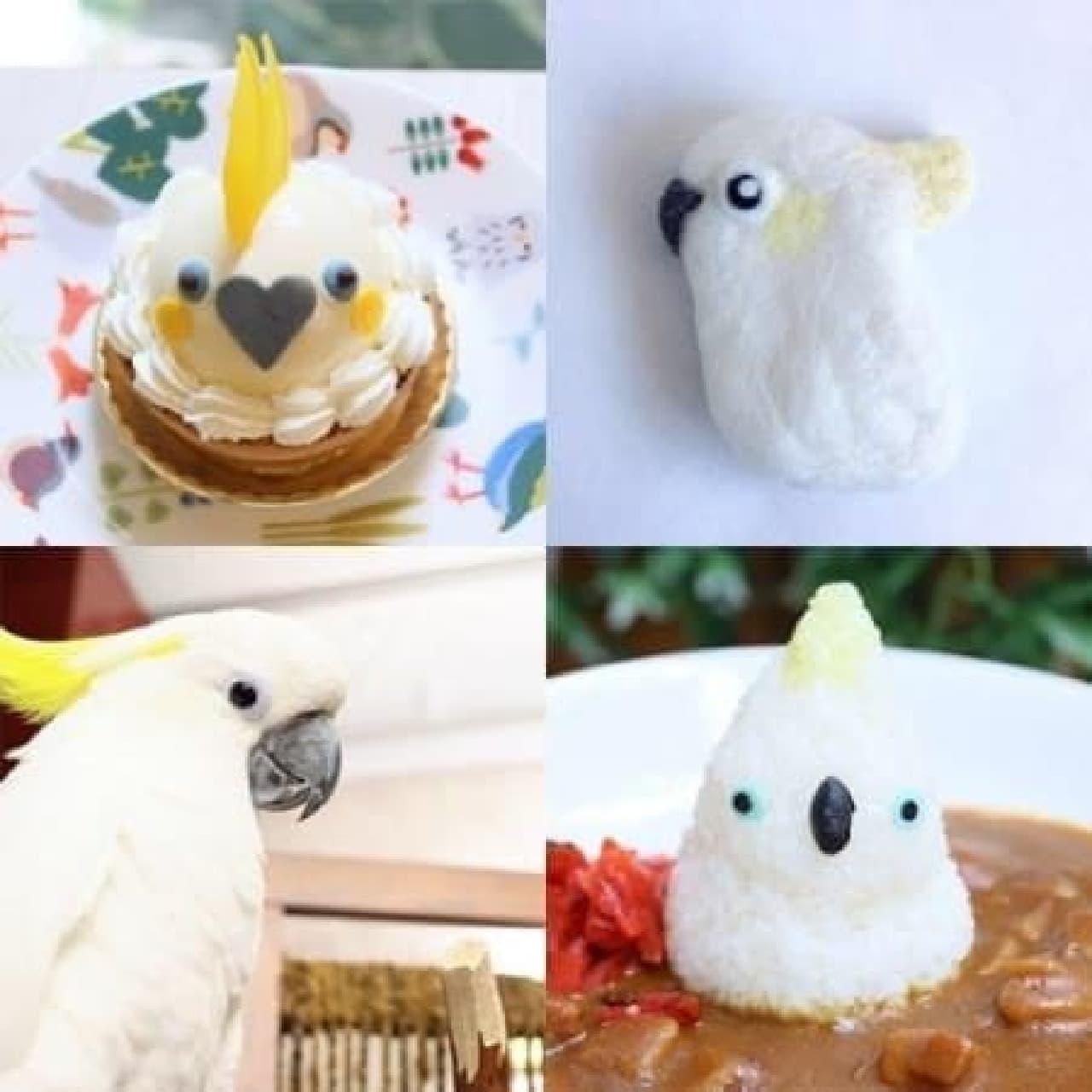 インコケーキやオウムカレーが食べられる!  (出典:ことりカフェ公式サイト)