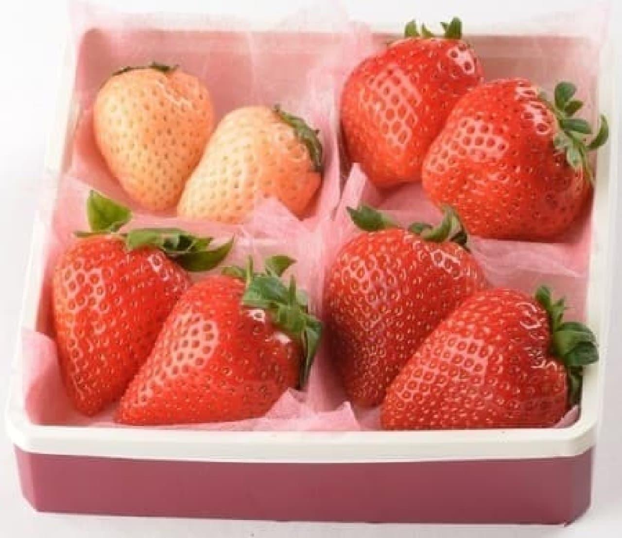 なかなかできないイチゴの味比べ!