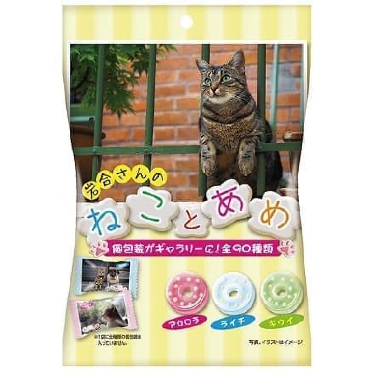 パイン「ねことあめ」、岩合光昭さん撮影のネコ写真がパッケージに