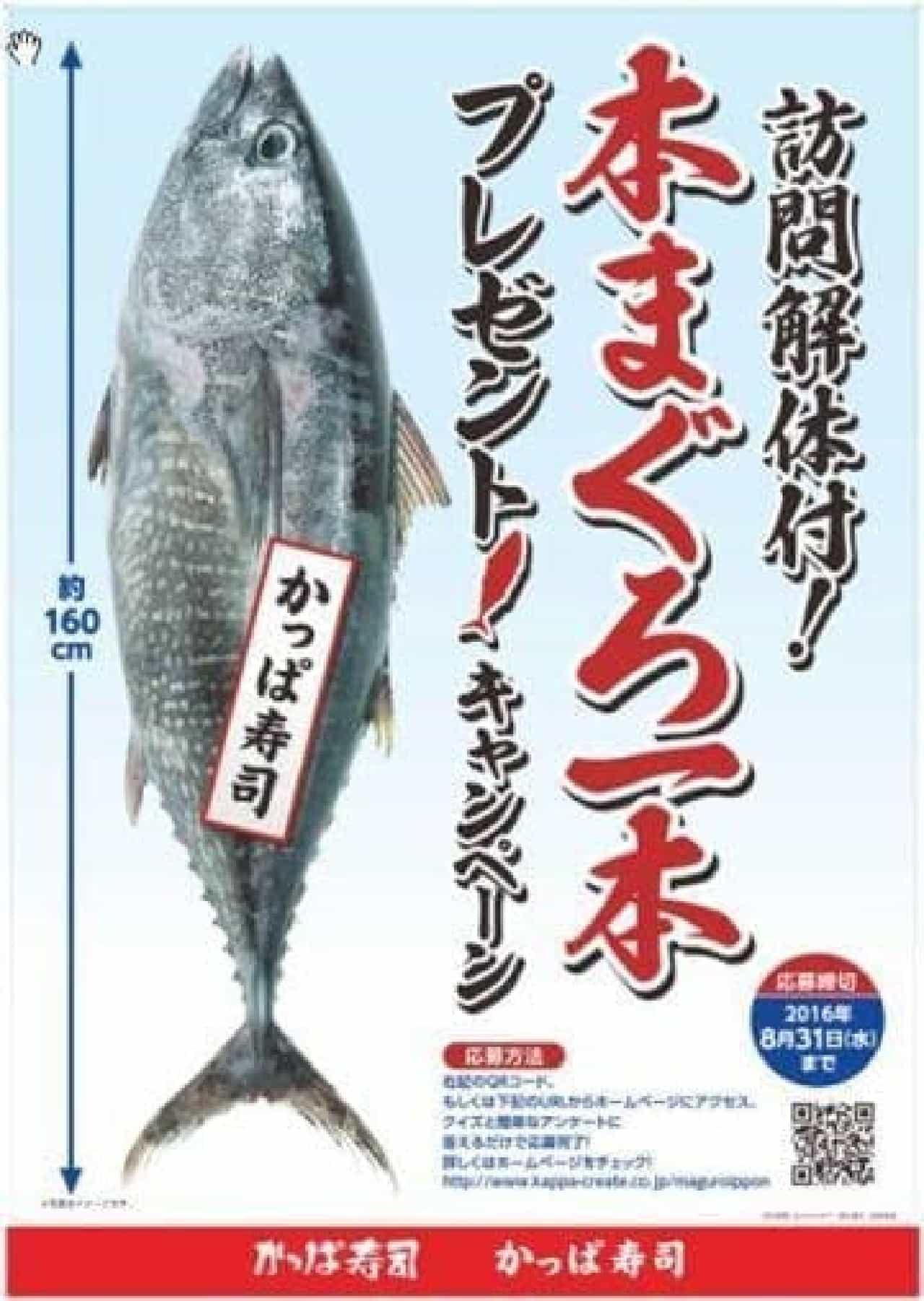 かっぱ寿司「本まぐろ一本プレゼントキャンペーン」