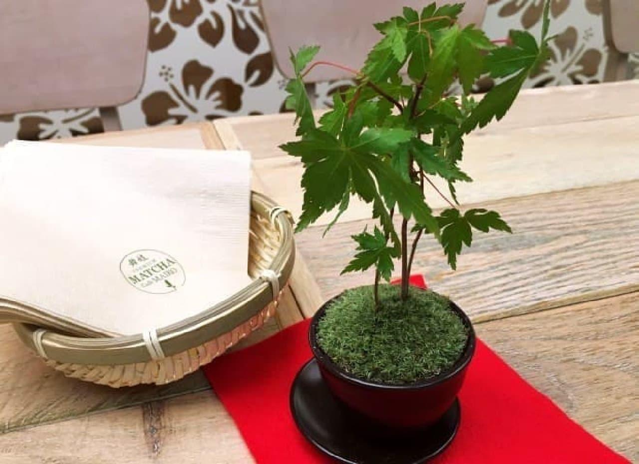 抹茶カフェ舞妓(まいこ)