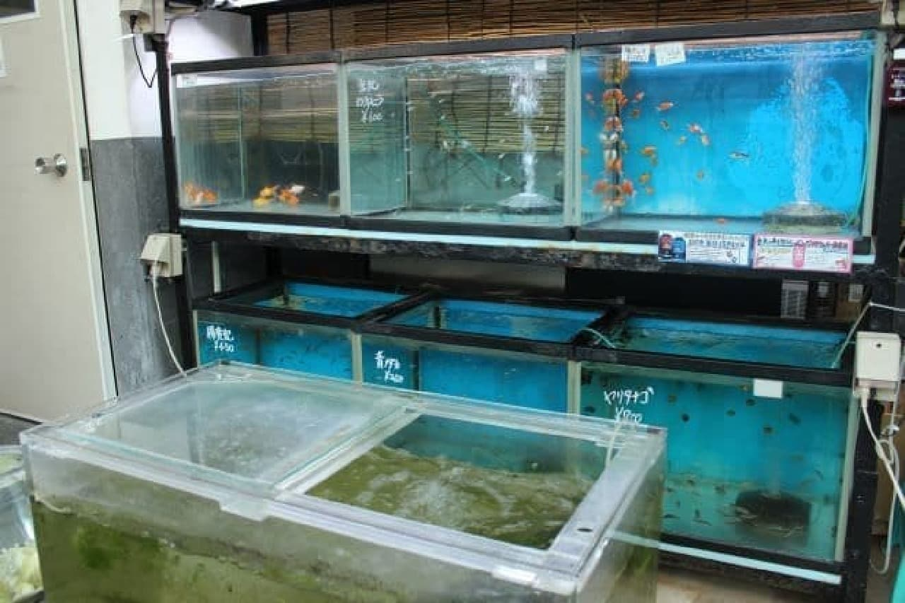 本郷三丁目にある喫茶店「金魚坂」で販売されている金魚