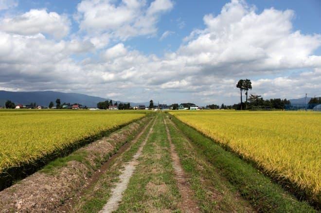 山形県おきたま地域の田園風景
