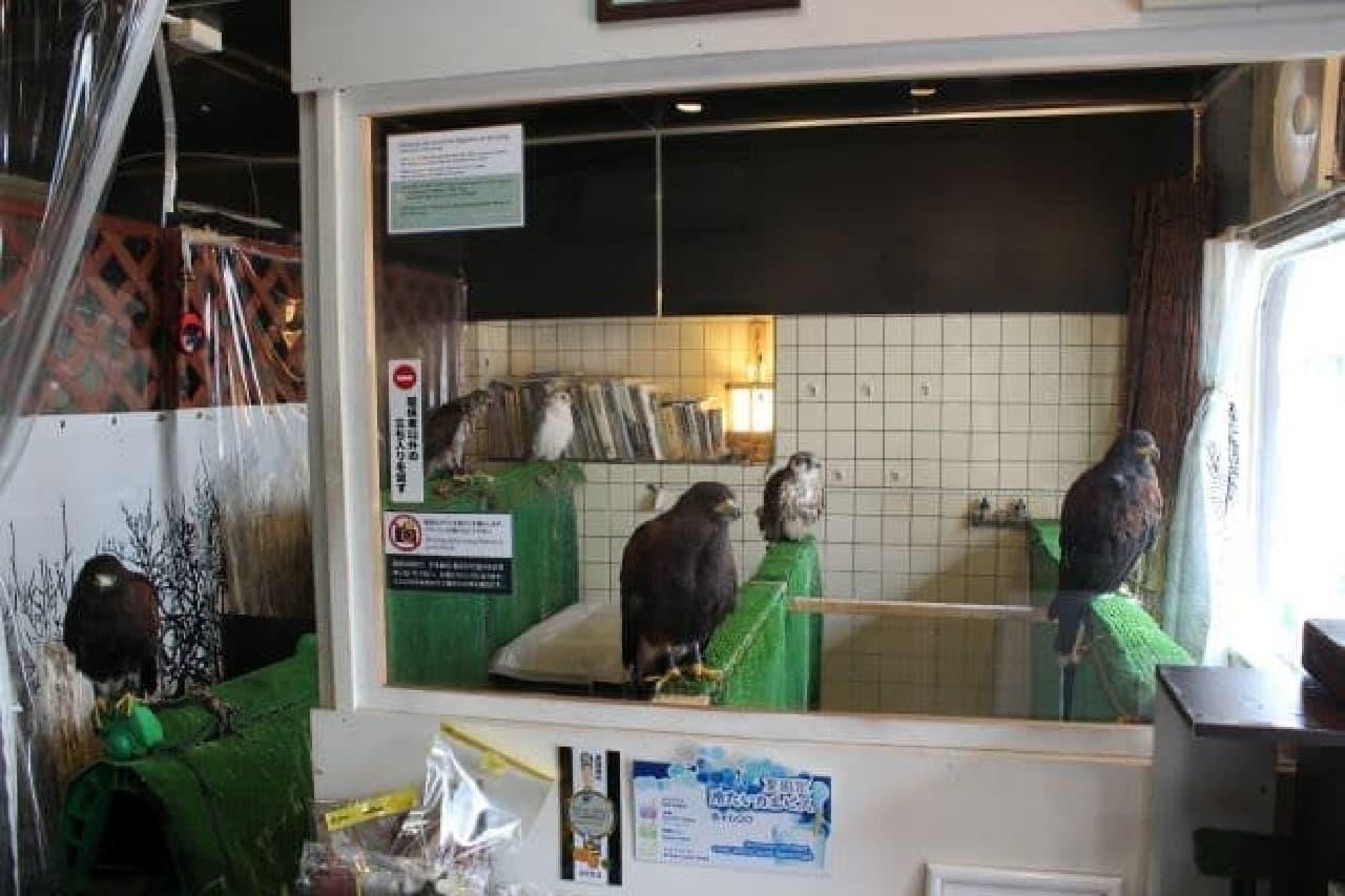 「鷹匠茶屋」は鷹匠が運営する鷹カフェ
