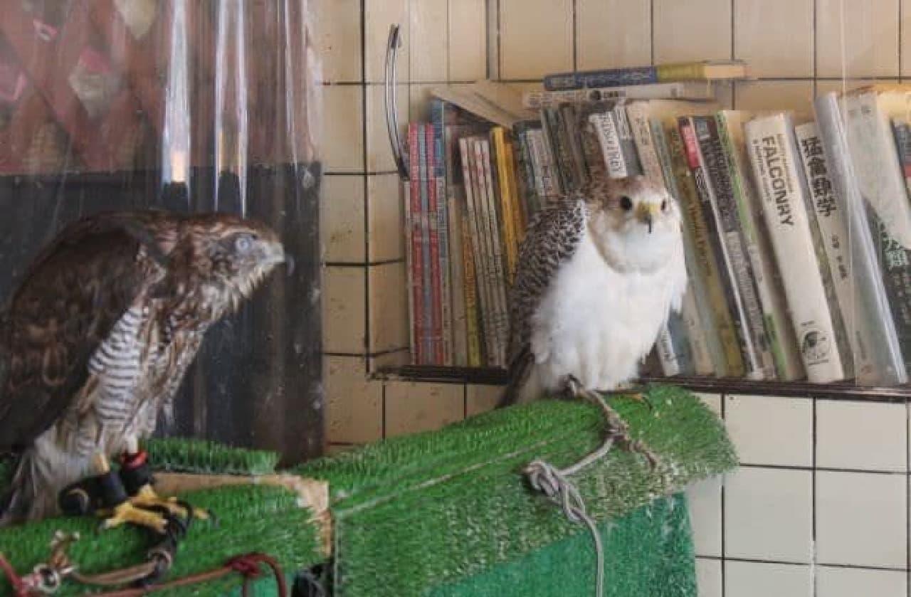 「鷹匠茶屋」で飼育されている猛禽類