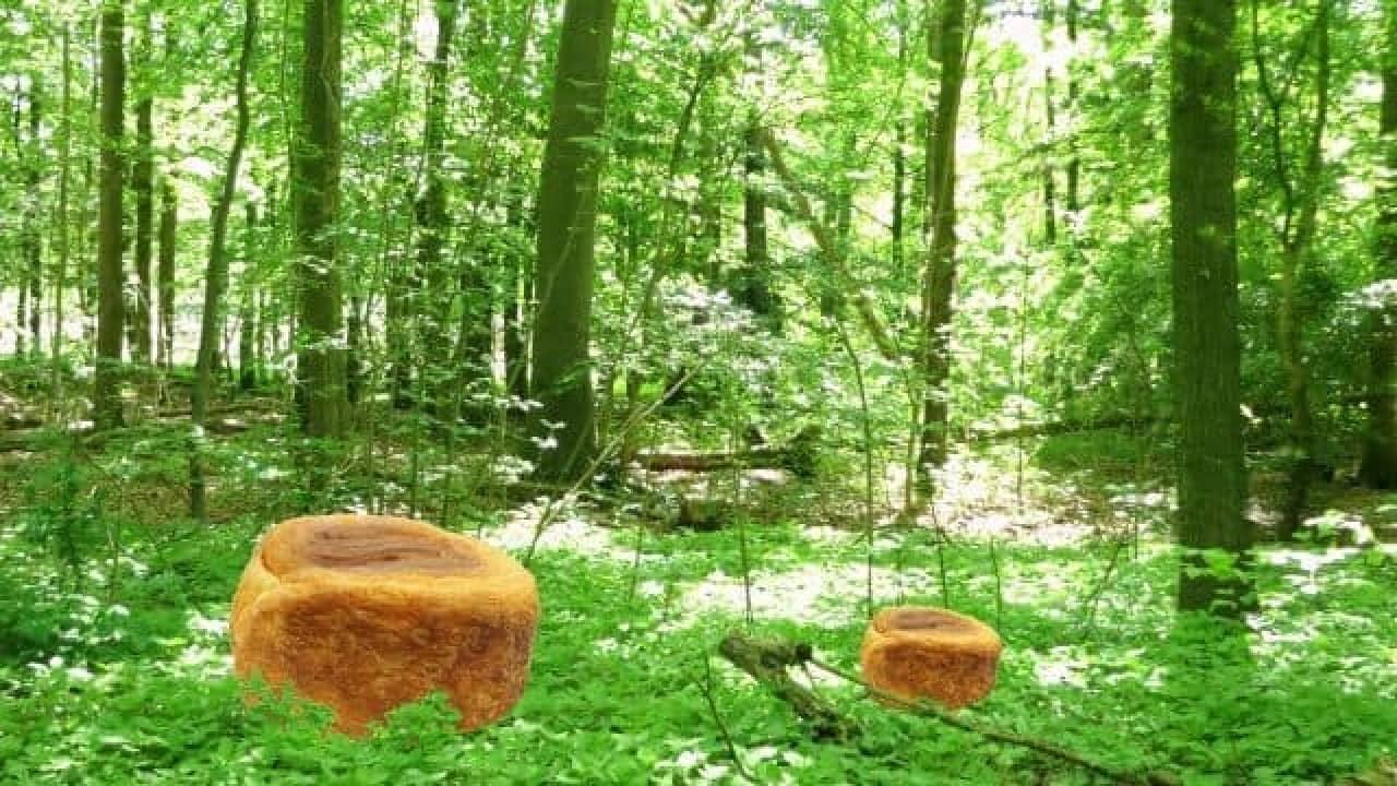 フジパン「森の切り株」と森が一体化した様子