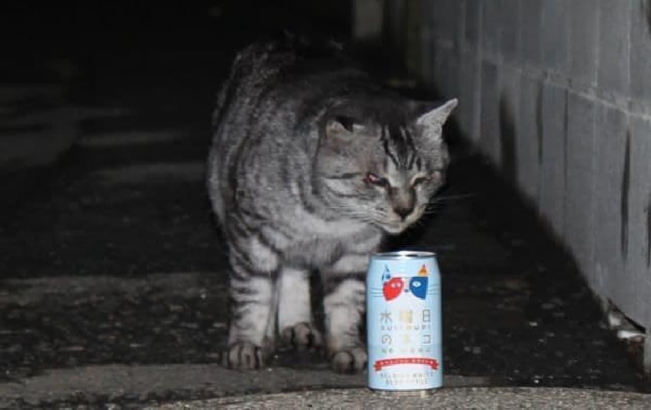 ビールの匂いをかぐネコ