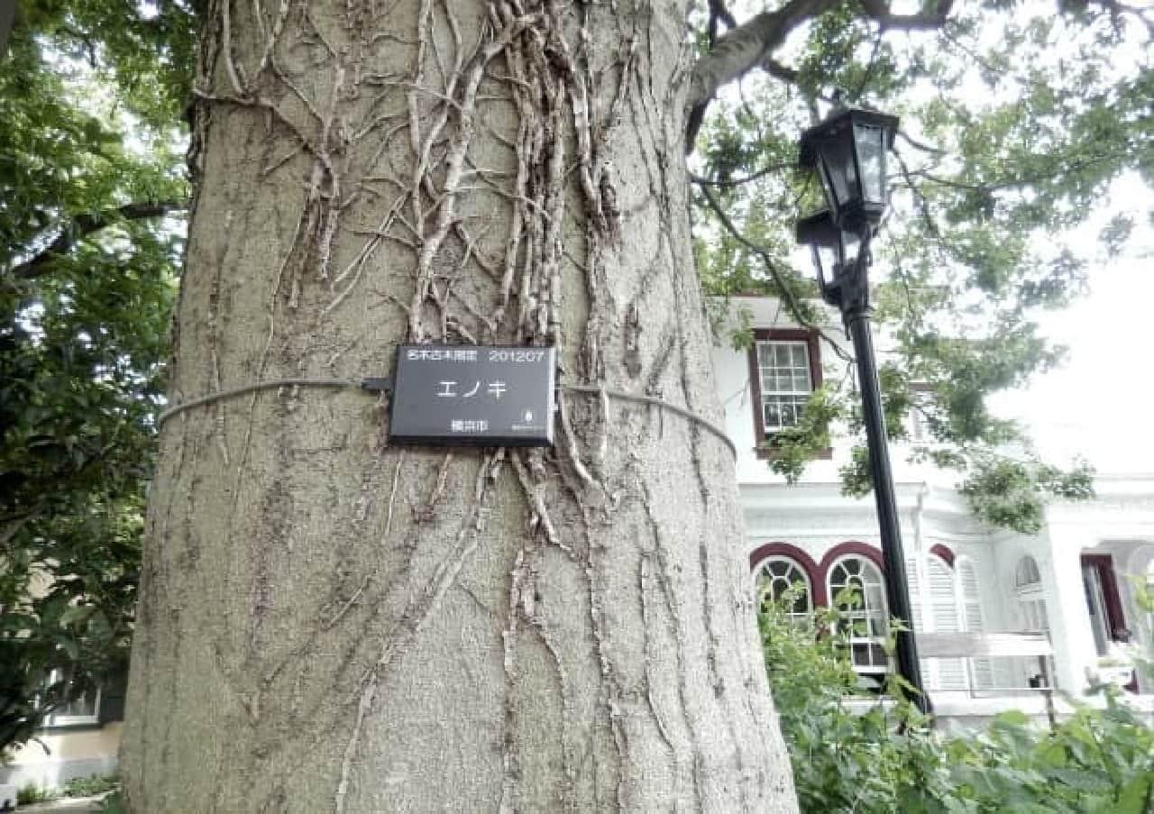 えの木ていの「チェリーサンド」