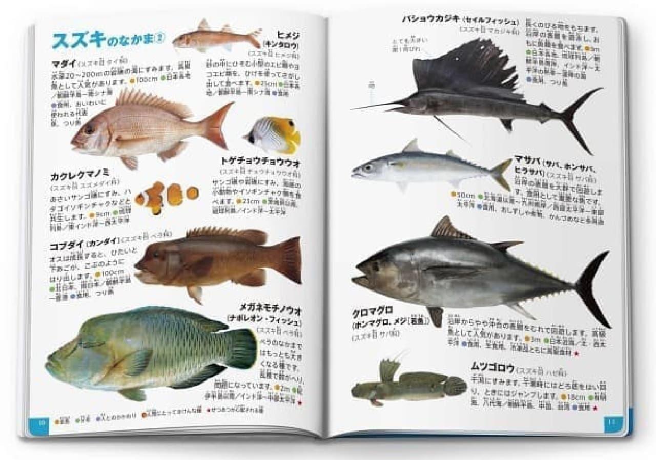マクドナルドのほんのハッピーセット第3弾ミニ図鑑「魚/うみのさかな」