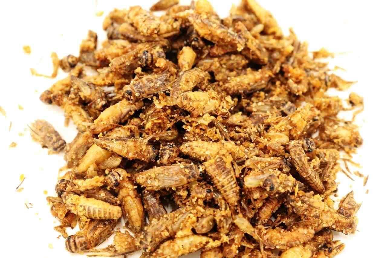 獣肉酒家 米とサーカス『昆虫食の自動販売機』のローストクリケット