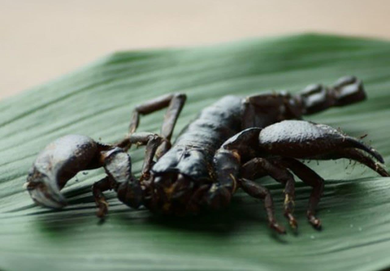 昆虫食「サソリチョコレート」