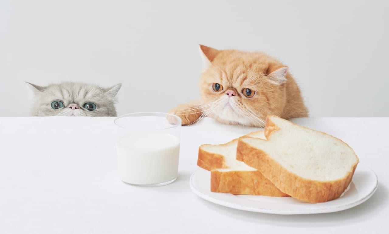 ねこねこ食パン「ねこねこ食パン2020年福袋」