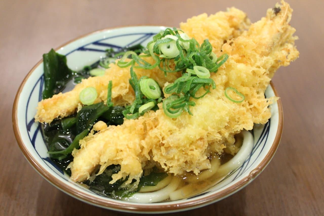 「丸亀製麺」で「寿 大海老うどん」
