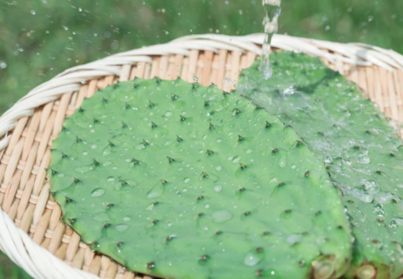 ブランド食用ウチワサボテン「太陽の葉」