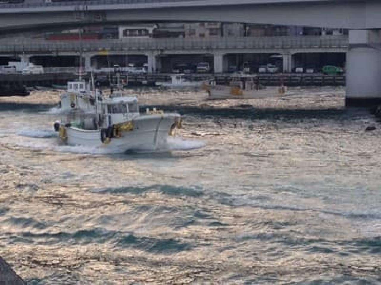 駿河湾産桜海老の漁