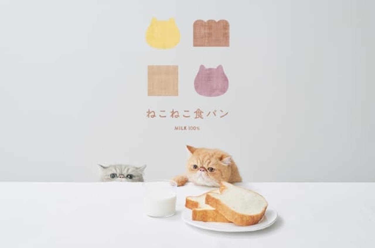 ねこねこ食パンとねこ