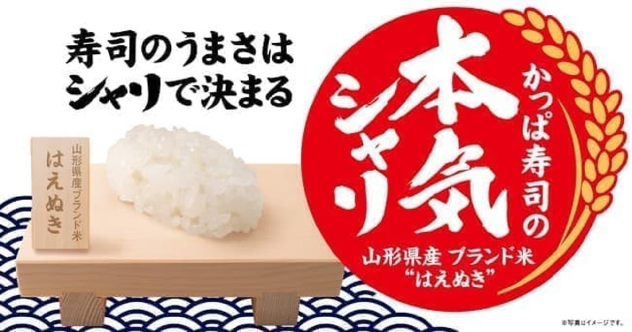 かっぱ寿司 「本気シャリ」