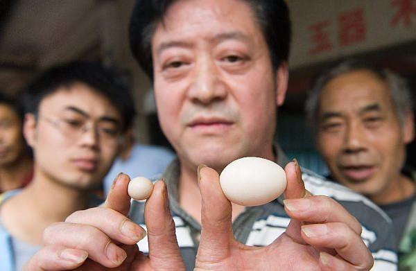 玉子の所有者である He Daiyou 氏(出典:China Daily)