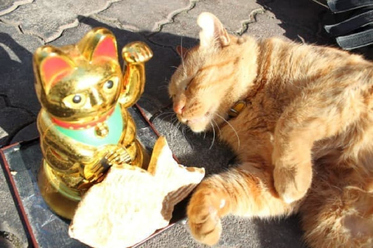 商店街のにゃんこ、たい焼きの見本と招き猫と一緒にパチリ