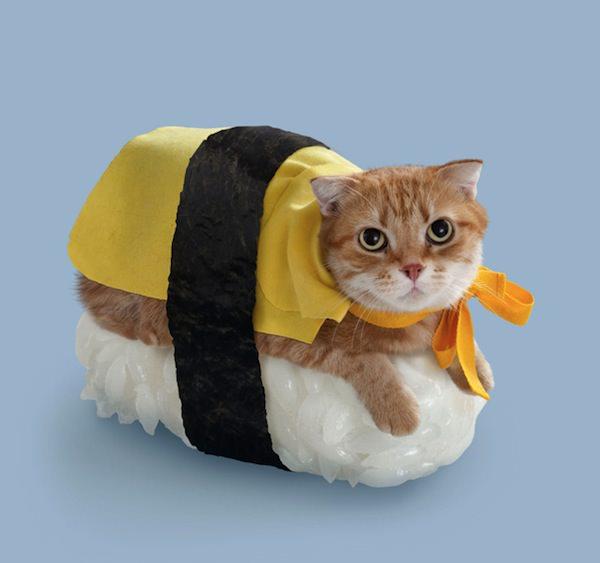 タンゲ&泣き虫ピーナッツさんによる写真作品「ネコずし」  この子の名前は「マーゴ」