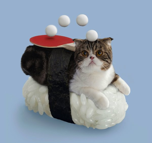 こちらは、宮尾  猫の地位向上に役立っているのかは不明