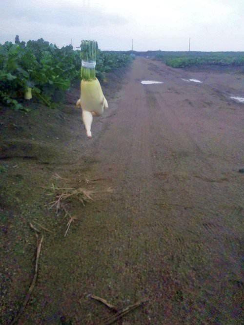 逃げる! 逃げる!   そして跳ぶ!見よ!バレリーナのようなつま先!   熊川哲也... 走って