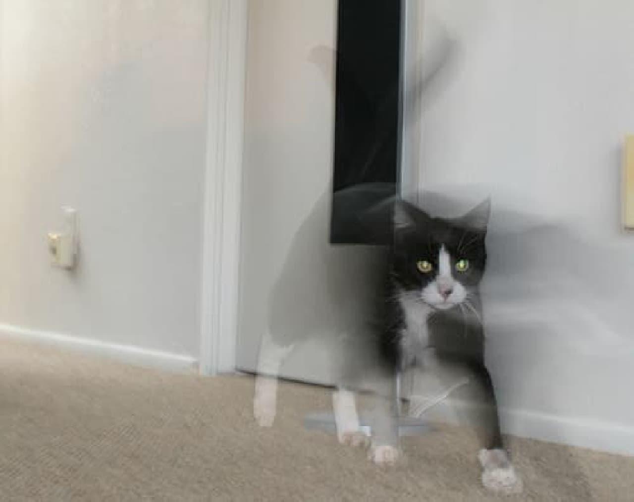 気化直前のネコ(写真はイメージです)
