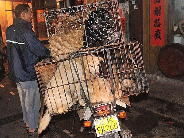 過去に開催された犬肉祭りの模様を伝える写真