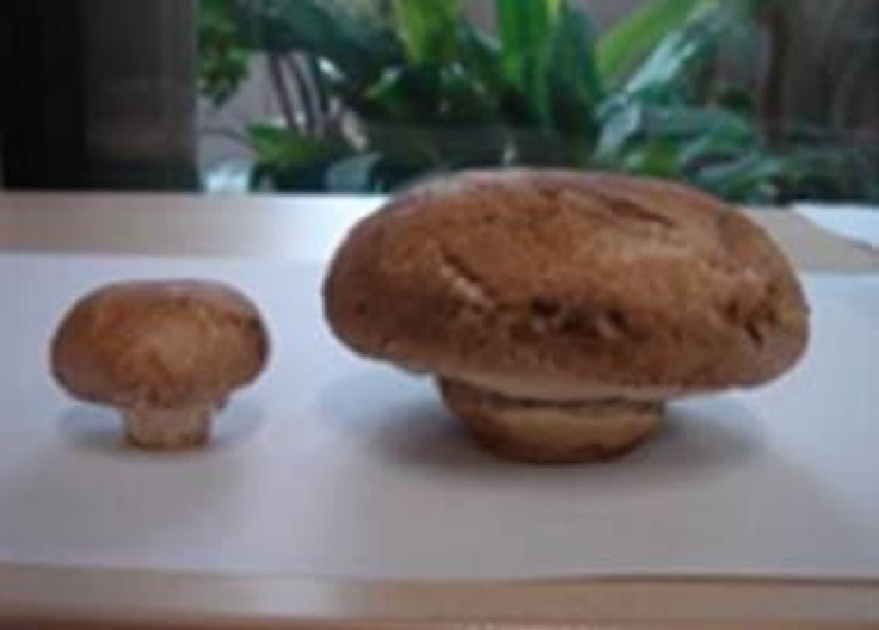 普通のマッシュルーム(左)とジャンボマッシュルーム(右)  国産のジャンボマッシュルームは貴重