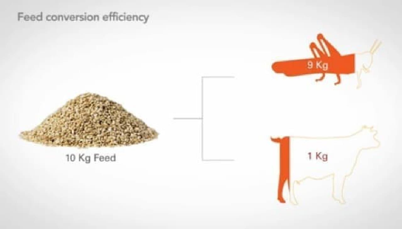 昆虫は、10kg の飼料から9kg のタンパク質を生みだせる