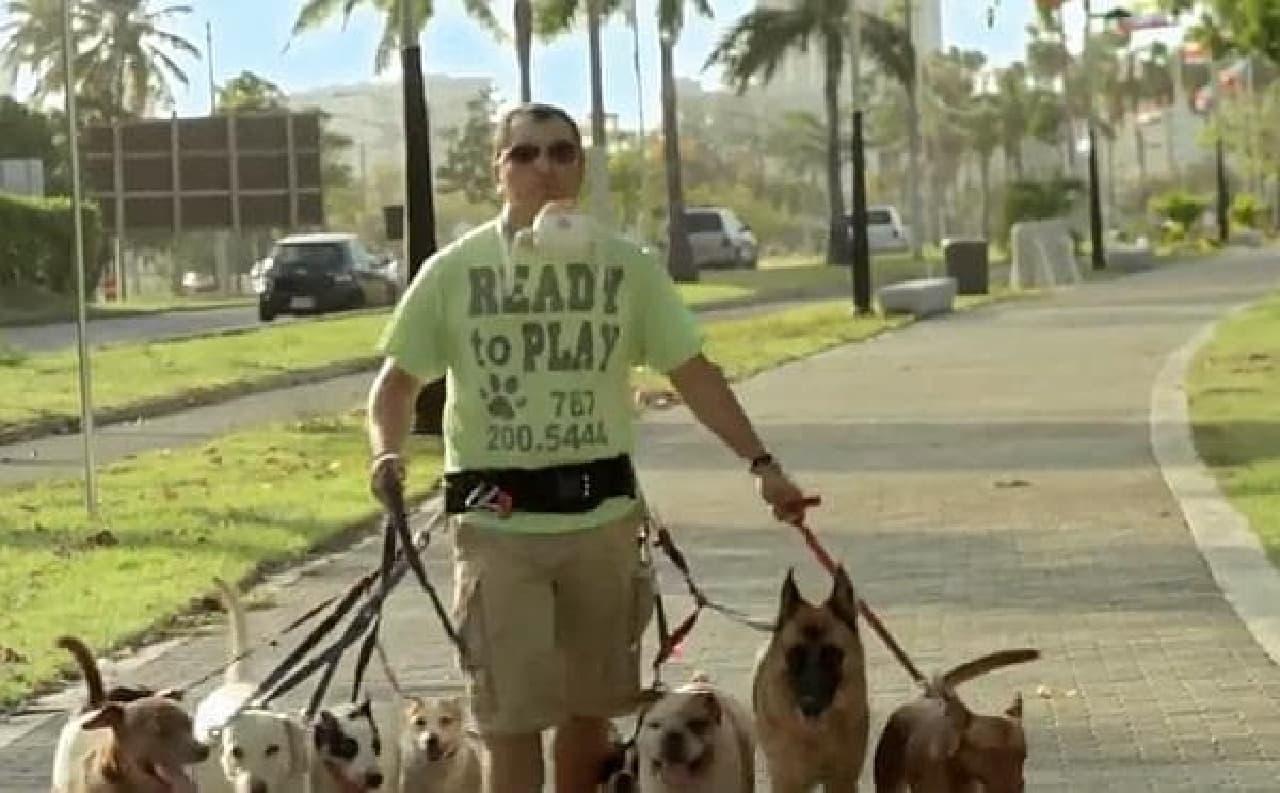 同時に7匹の犬を散歩させることも簡単