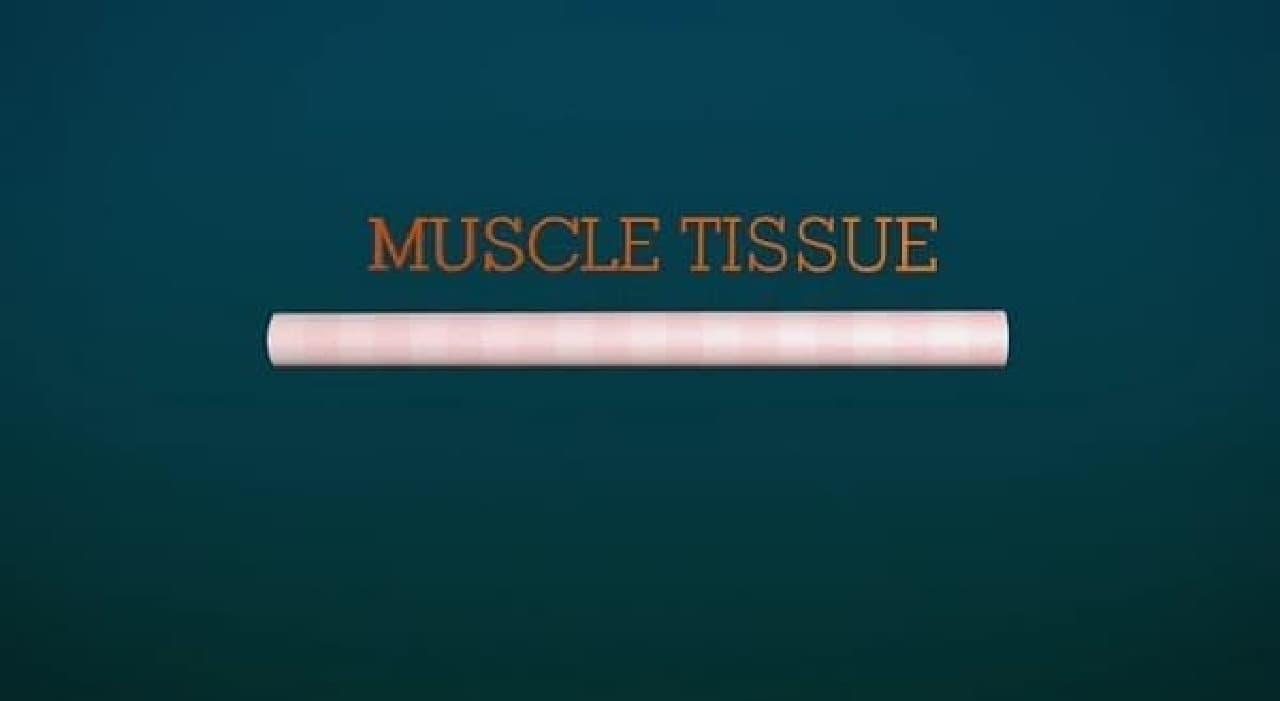 筋肉繊維に成長