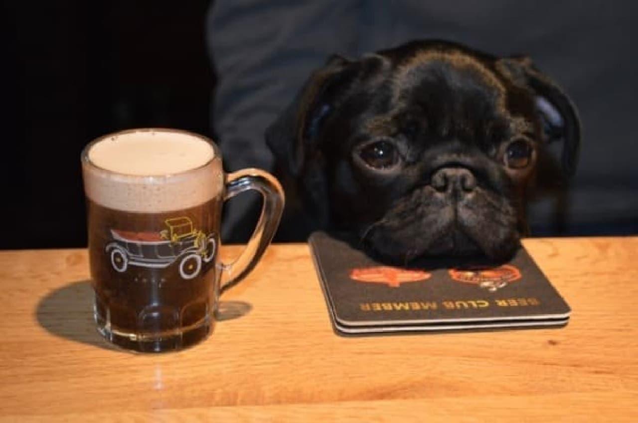 ちょっと飲み過ぎたかな~  (出典:Dogs in Pubs)