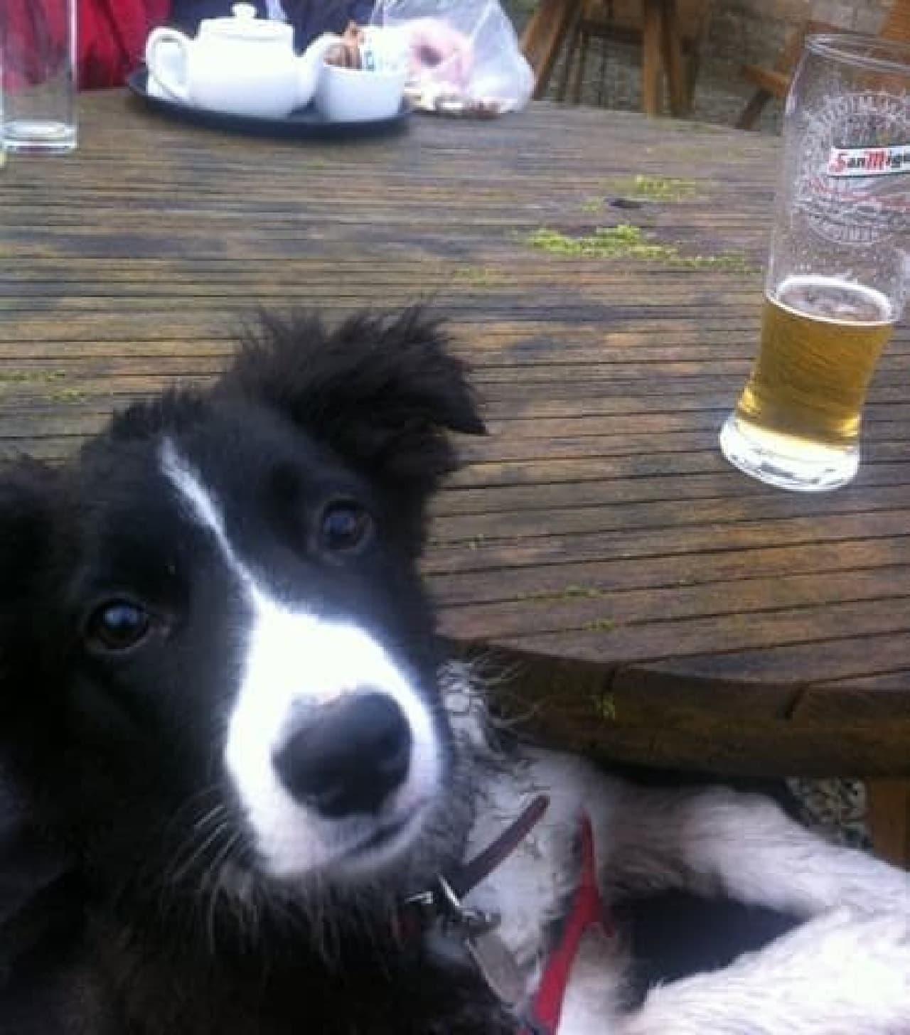 飼い主さんのおひざの上で  (出典:Dogs in Pubs)