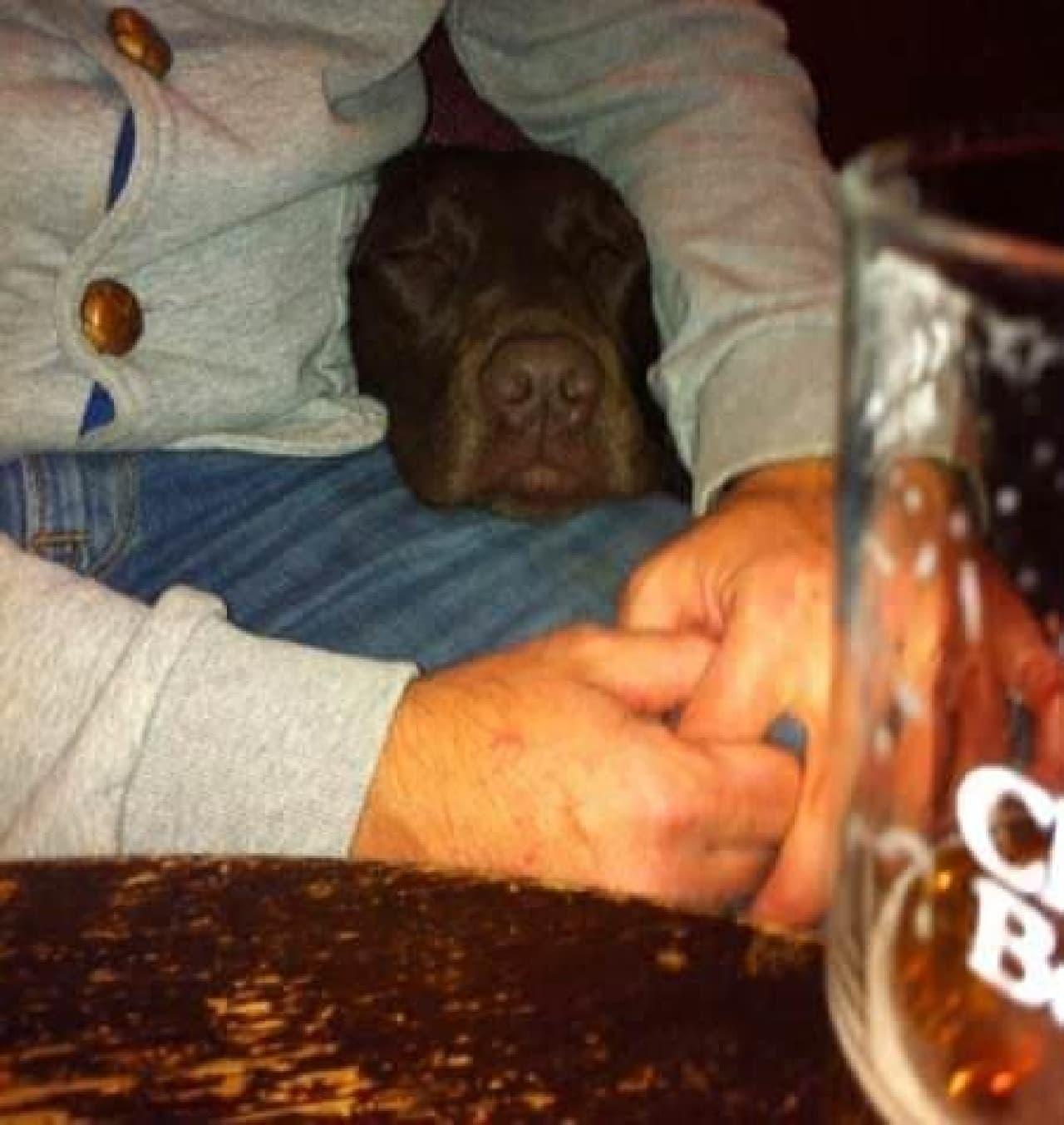 「もう眠いワン...」  (出典:Dogs in Pubs)