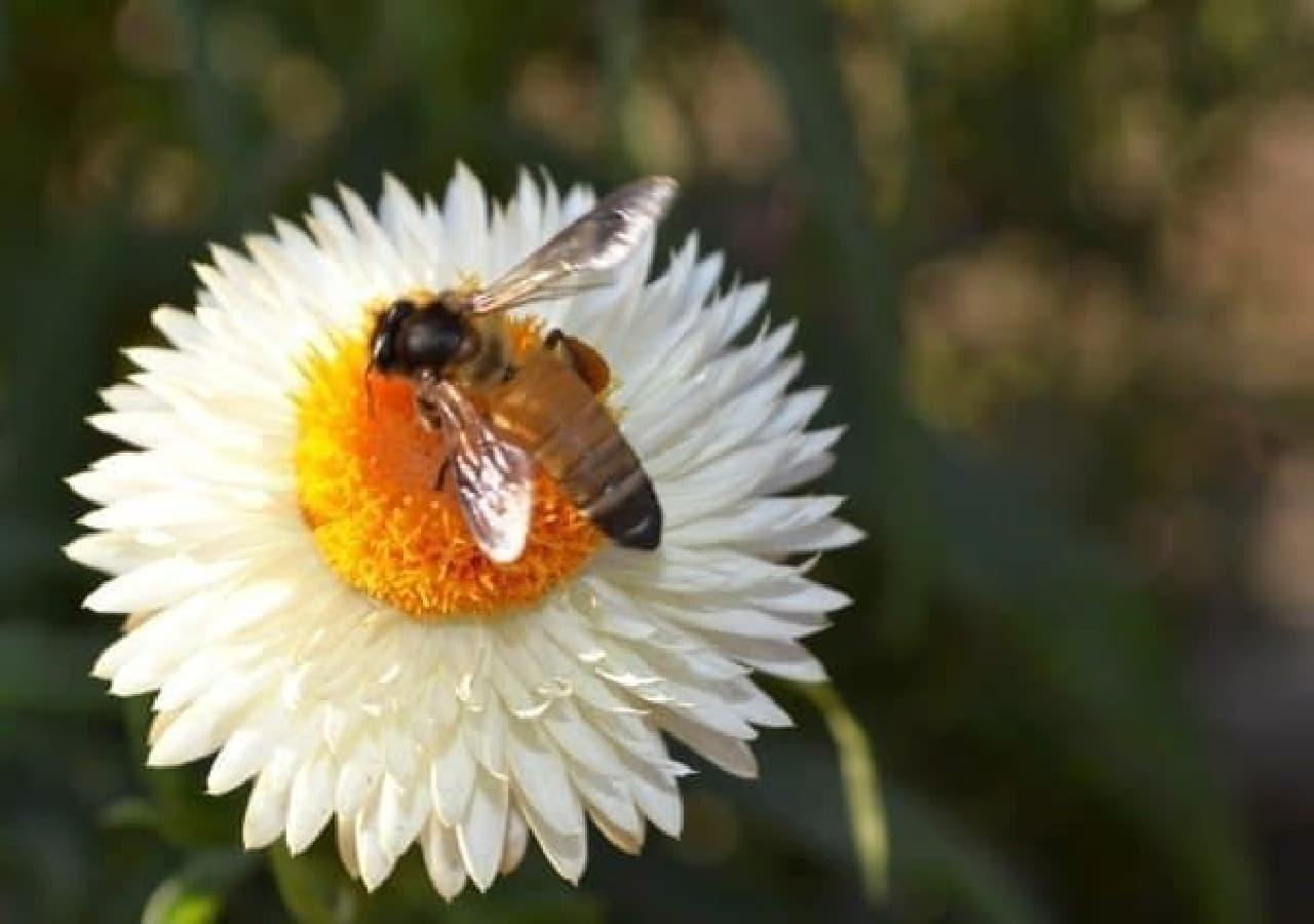 ミツバチと共存していかなきゃね