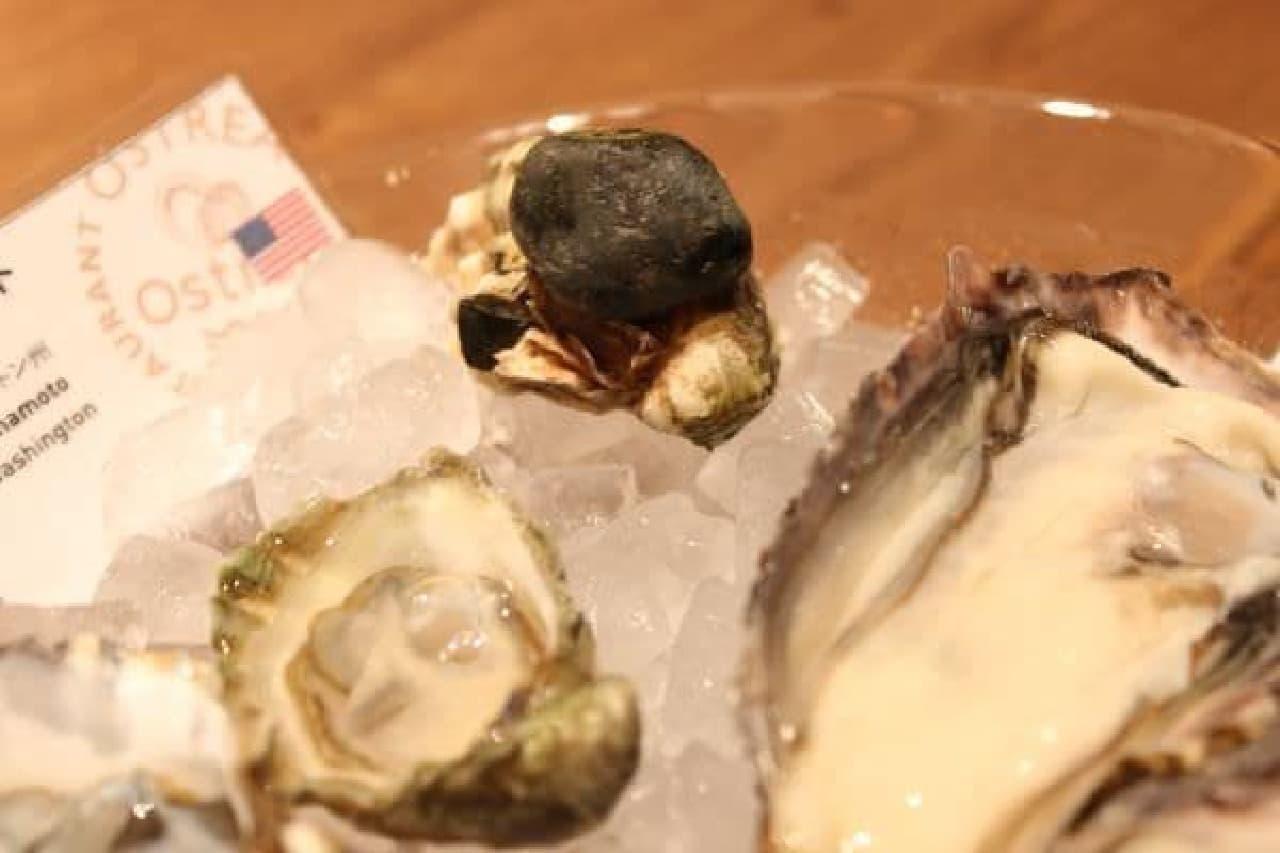 殻に石がくっついた牡蠣!なかなか貴重らしい!