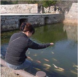 余ったら、鯉にあげよう!