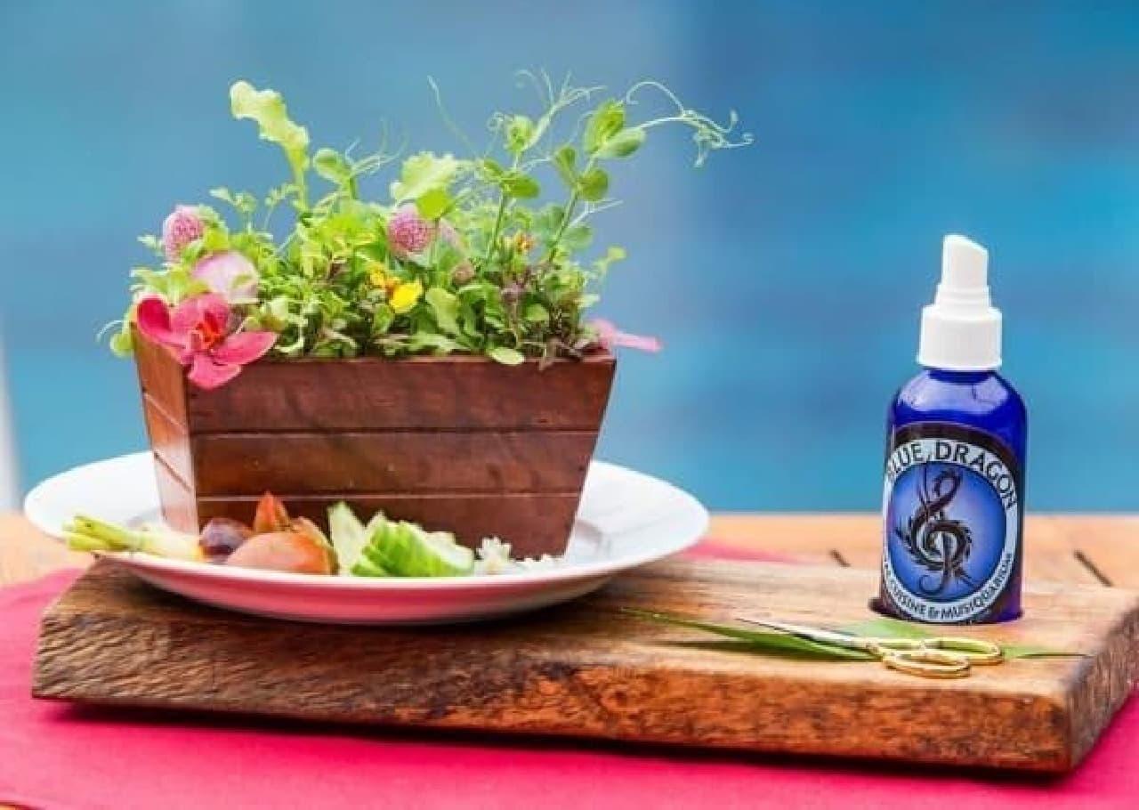斬新な新メニュー「生きているサラダ」  (出典:Blue Dragon Restaurant 公式 Facebook)
