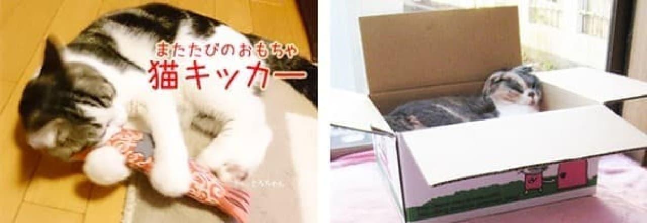 猫キッカーと遊ぶ猫ちゃん(左)と、段ボールを気に入る猫ちゃん(右)  (出典:ビクトレージ)