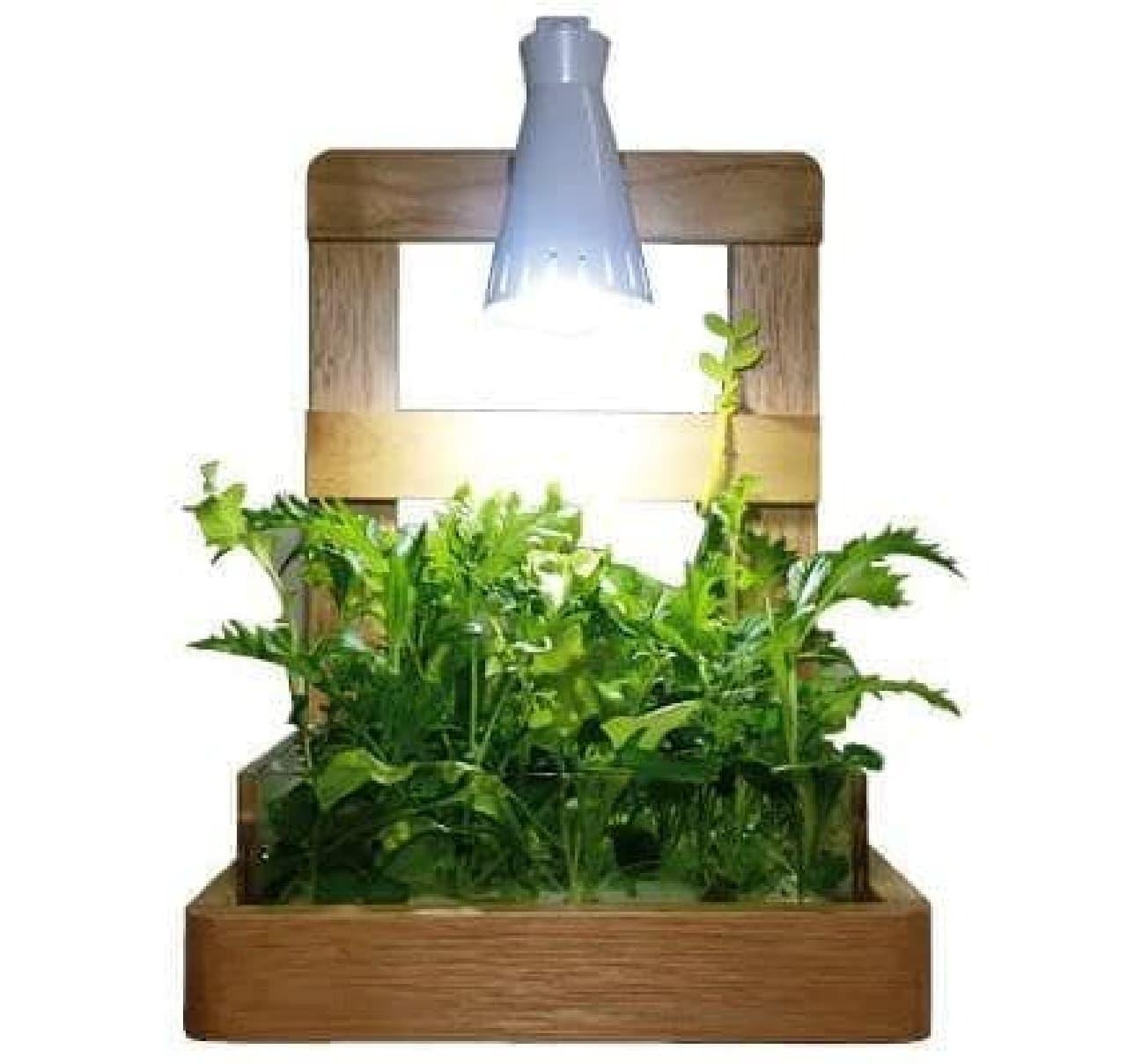 室内で育てられる栽培キット「NatureBox」