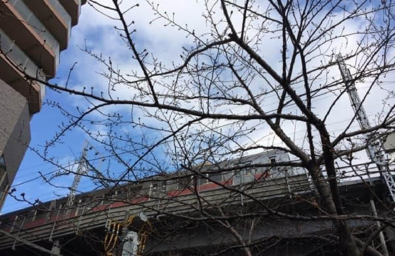 今年も、きれいな桜が見られますように...
