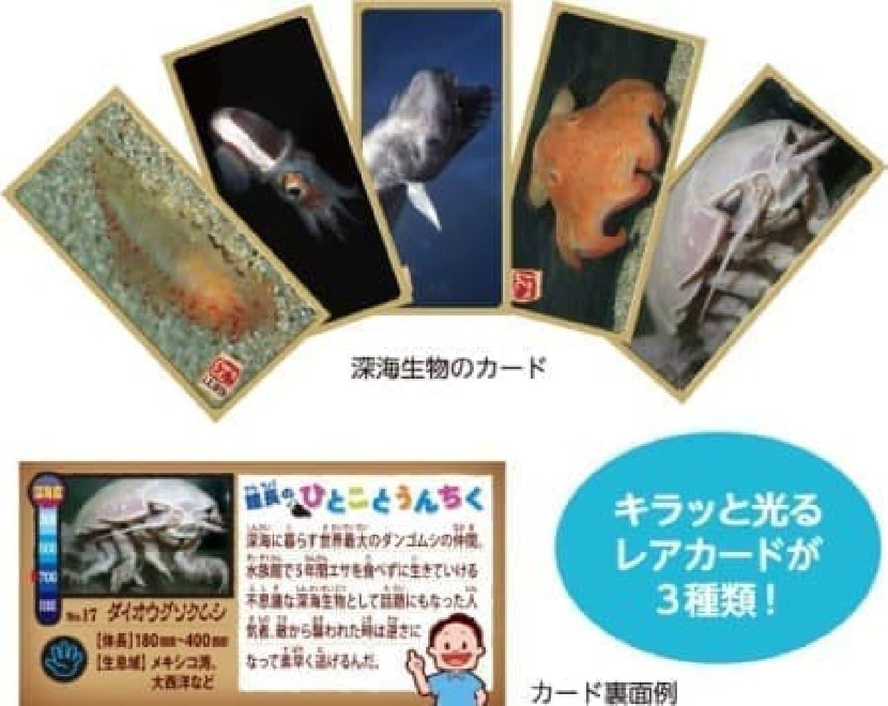 """""""キモかわいい""""深海生物がラインナップ!"""