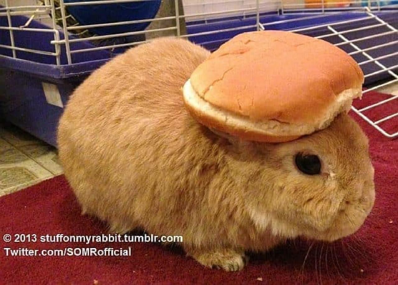 ハンバーガーのバンズ