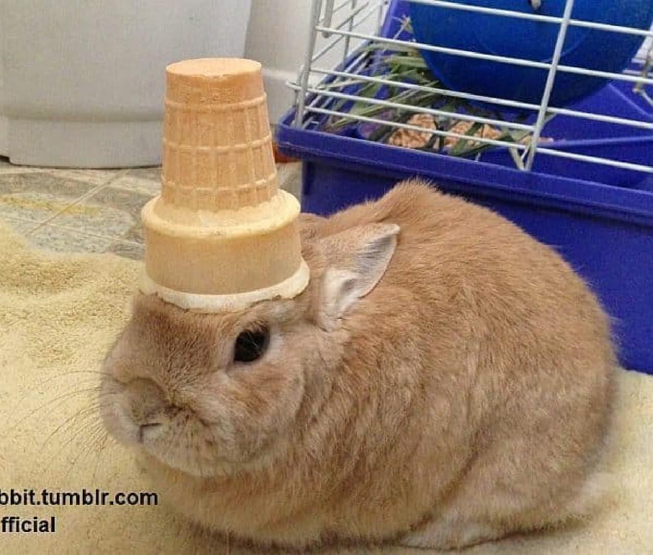 アイスクリームコーンものせてます  似合ってますね?