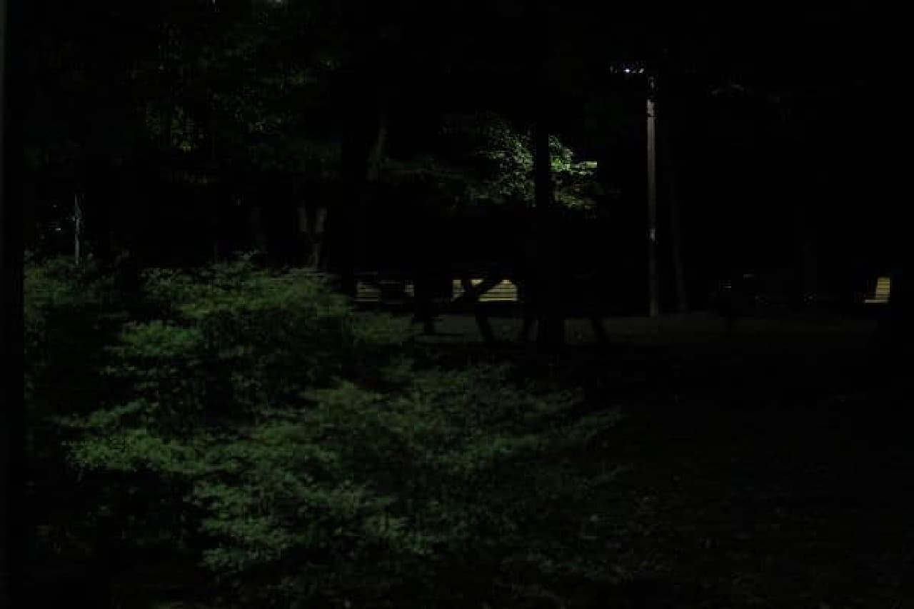 林の中に少なくとも3匹いる